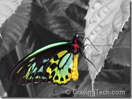 Color Splash for iPad Review
