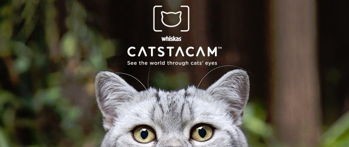 Instagram for Cats