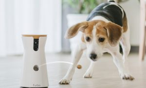 Furbo Dog Camera is launching in Australia and it has a Special Feature